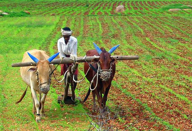 India's Agriculture Crisis- Business News