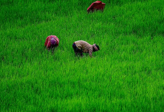 Rebooting Economy 53: Why crop insurance is losing traction in India