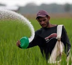 Cabinet nod to hike in DAP fertiliser subsidy by Rs 700 per bag