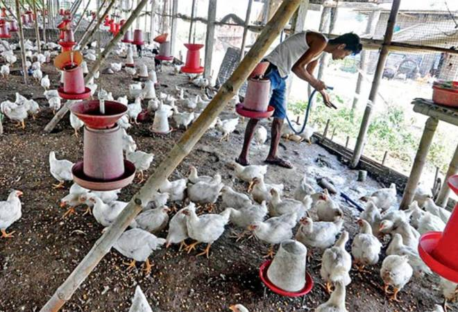 Coronavirus impact: Govt needs to act before COVID-19 slaughters the Rs 1 lakh crore Indian poultry industry