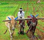 Govt pays over Rs 50,000 crore to farmers under PM-KISAN scheme