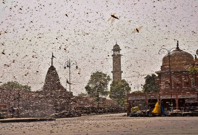 Locust attack in Mumbai: Authorities allay fears as WhatsApp messages claim infestation