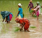 Less rainfall likely to affect kharif crops production