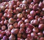Income Tax Department inspects Onion Traders In Maharashtra, Delhi, Madhya Pradesh