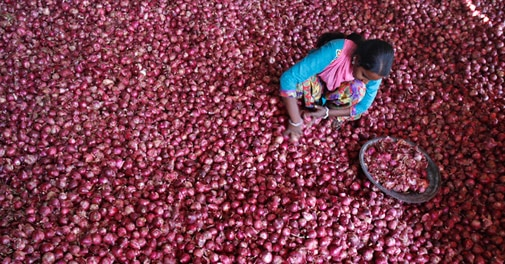 Govt to limit stockholding of onions, potatoes to check hoarding