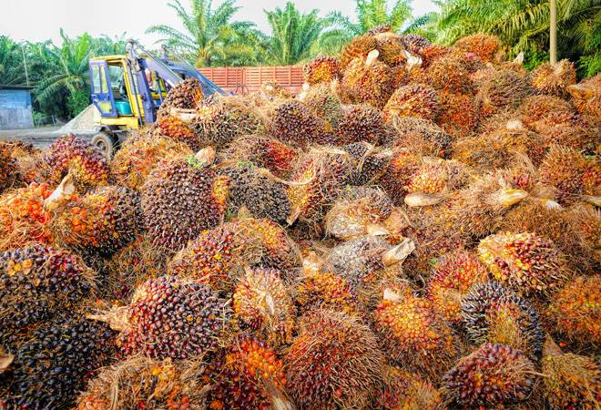 India imposes 5% safeguard duty on Malaysian refined palm oil