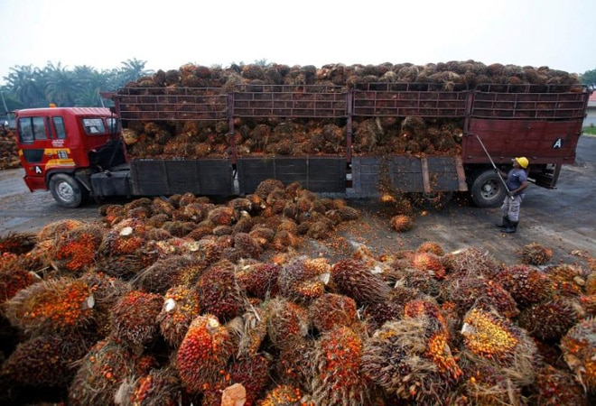 India slashes import tax on crude palm oil from 37.5% to 27.5%
