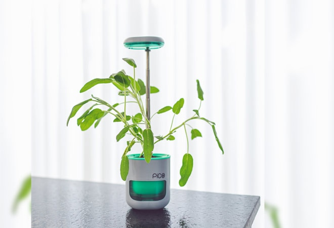 Pico - the smart indoor plant incubator - starts shipping