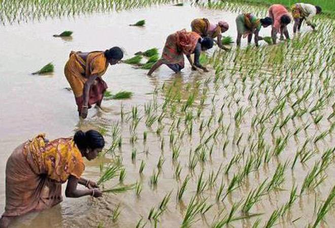 Foodgrain production set to rise as normal monsoon brings hope to farmers