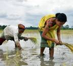Farmers to accelerate crop sowing as monsoon covers two-third of India earlier than usual