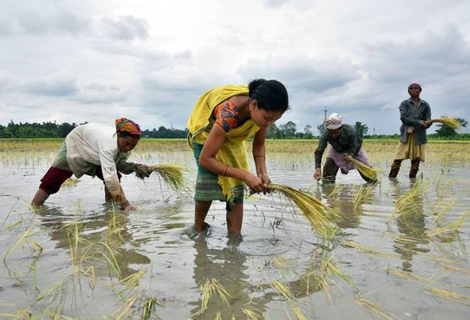 Late monsoon slows down kharif sowing