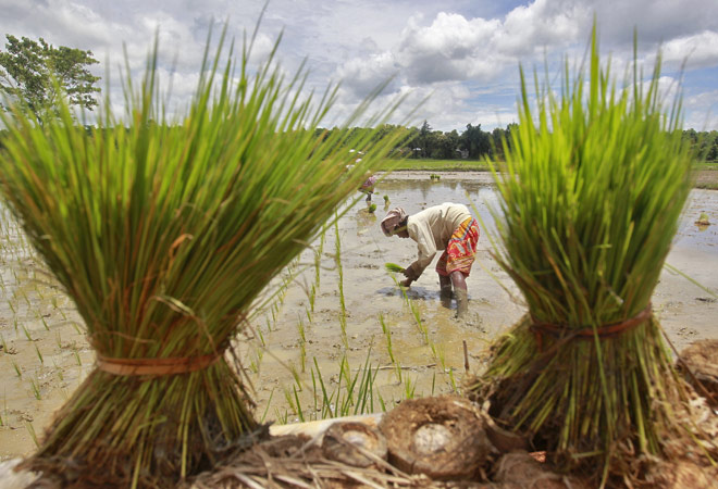 More rainfall likely next week may hurt farmers