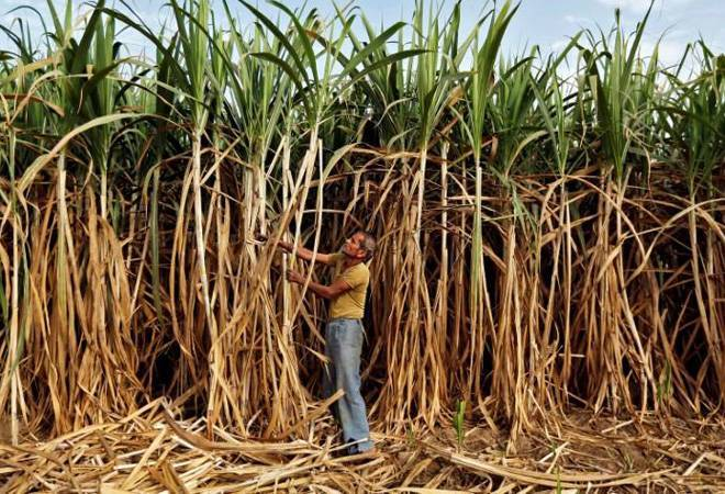 India Ratings, CRISIL see Centre's sugar bailout package to have limited impact