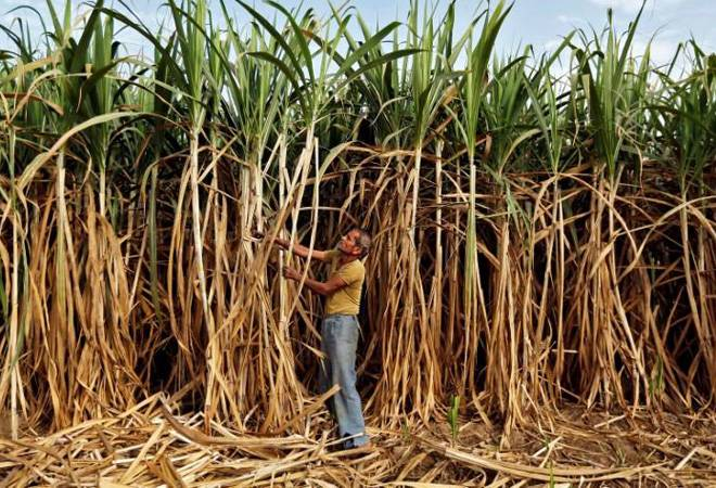 Top sugar producing state Uttar Pradesh keeps cane prices unchanged