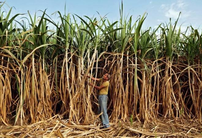 Centre's ethanol impetus prompts sugar mills to raise production