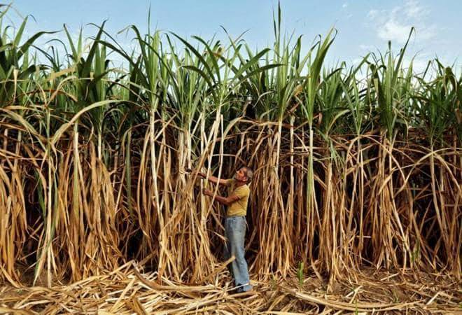 Sugarcane farmer's suicide triggers protest in UP