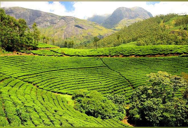 Tea exports from India remain stagnant in first eight months of 2019