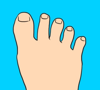 e44b9d84fb05 The traveller s foot—this foot has toes which either have a lot of gap  between all the toes