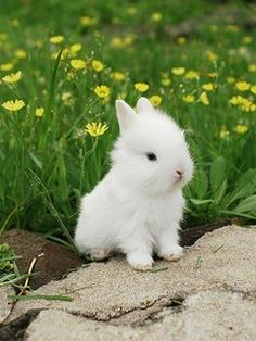 15 super cute baby bunnies that will have you smiling for no reason