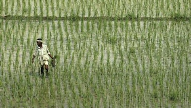 Rice cultivation, Agriculture subsidies, Power subsidy, Punjab
