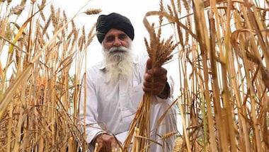 Punjab agriculture produce market committee, Sukhbir singh badal, Punjab Farmers, Farmbills