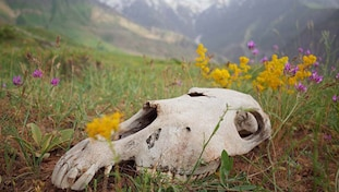 Animal killings, Biodiversity loss, Pesticides, Insecticide