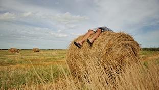 Vincent van gogh, Sleeping on the farm, Farming