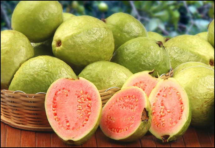fun-facts-of-guavas_040416024615.jpg