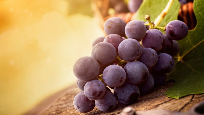 purple-grapes-2560x1_040416024410.jpg