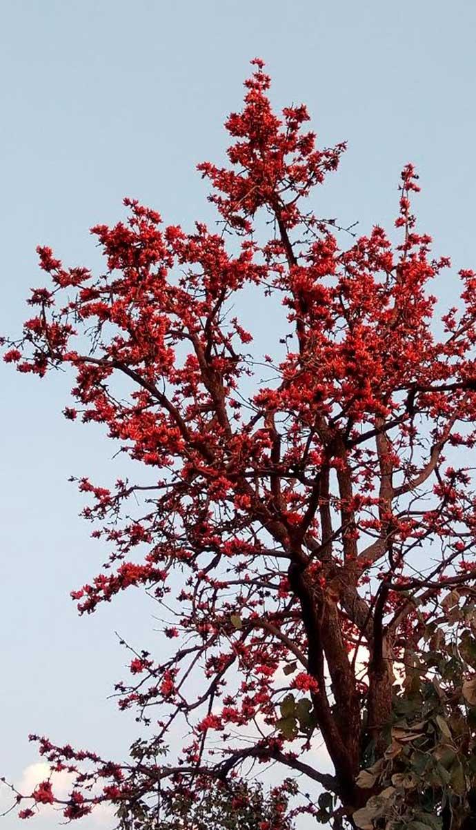 tree_031617110030.jpg