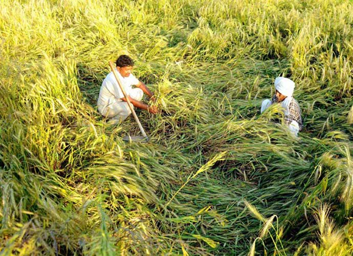 A study reveals that 81.52 per cent of those enjoying the benefits of free power are medium and large farmers. Photo: PTI/File