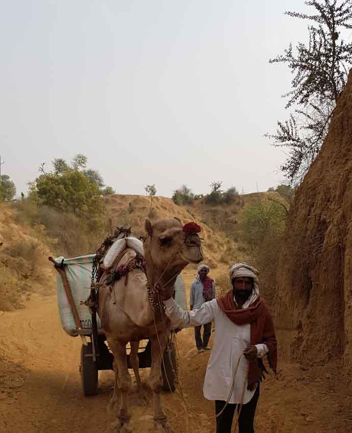 camel_012618050623.jpg
