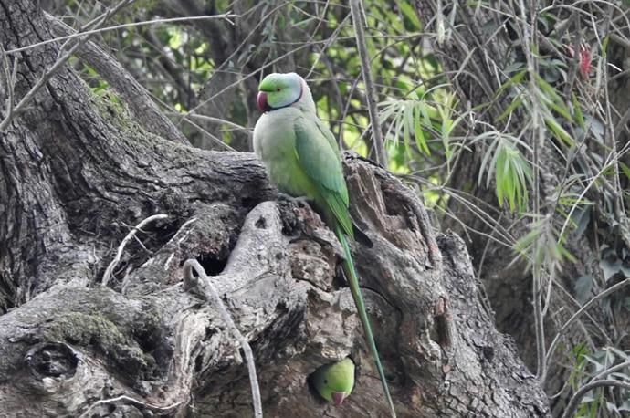 parrot-copy_022418011237.jpg