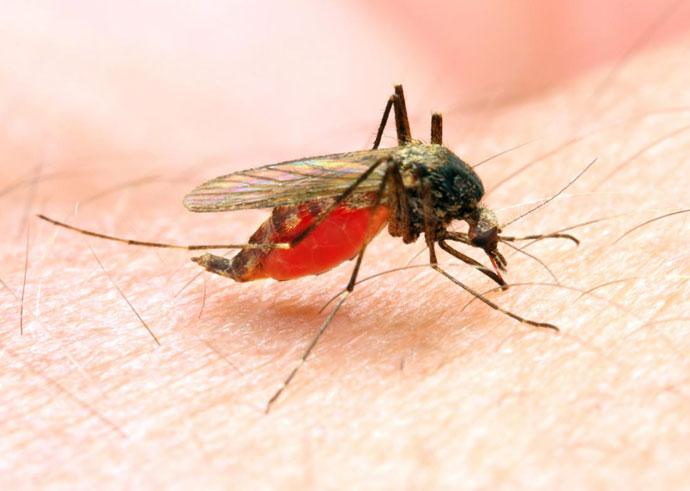 malariaa_030518055031.jpg