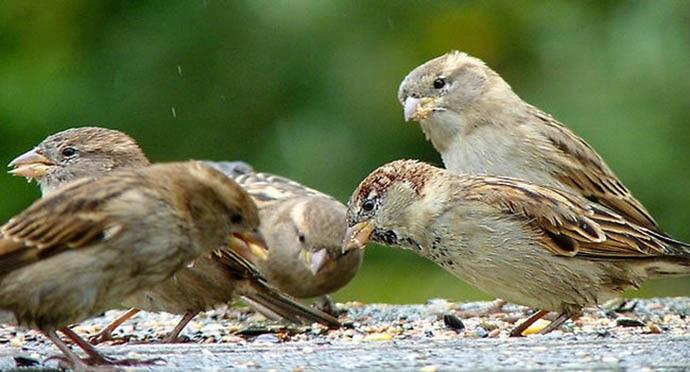 sparrow_inside_032018021251.jpg