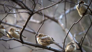 Fauna, World sparrow day