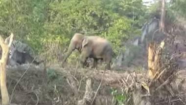 Elephant corridor, Environment, Wildlife