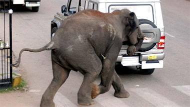 Develop, Poaching, Wildlife, Elephants