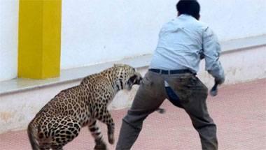 Animal Rights, Goat Arrested in Chhattisgarh, Leopard attack