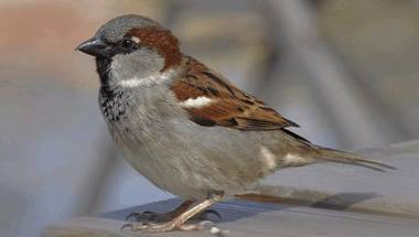 Birds, Sparrow, World sparrow day