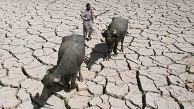 Maharashtra government, IPL 9, Farmer suicides