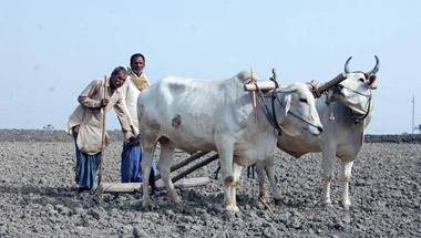 Water Crisis, Farmer suicides, Bundelkhand, Drought
