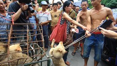 Dadri, Holy Cow, Yulin Dog Meat Festival