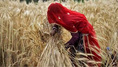 Maharashtra drought, NCRB, Farmer Suicide