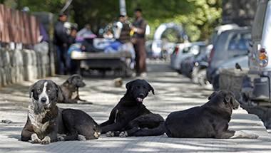 Kerala, Stray Dogs, Animal abuse, Maneka Gandhi