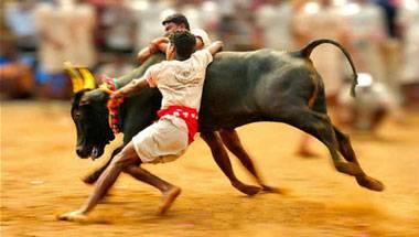 Animal abuse, Tamil Nadu, Jallikattu, Animal Cruelty