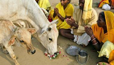 Prevention of Cruelty to Animals Act, BJP, Slaughter, Cow