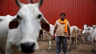 Cow Slaughter, Cow Vigilantism, Beef, Gau Rakshaks