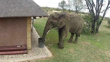 Elephant, Narendra Modi, Swachh Bharat Abhiyaan, Sadhguru Jaggi Vasudev