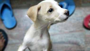 Prevention of Cruelty to Animals Act, Animals tortured, Dogs, Cruelty To Animals